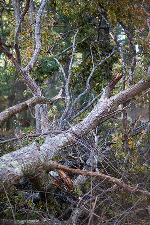 17-10-30 Downed Tree