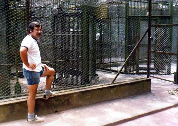 Grilo na Zona dos macacos