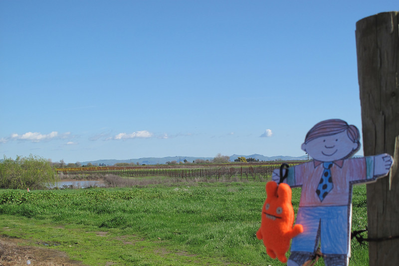 Flat Stanley looks out over vineyards in Sonoma