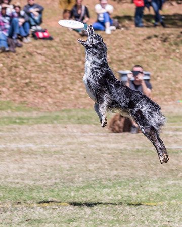 2017 Southern Disc Dog Nationals