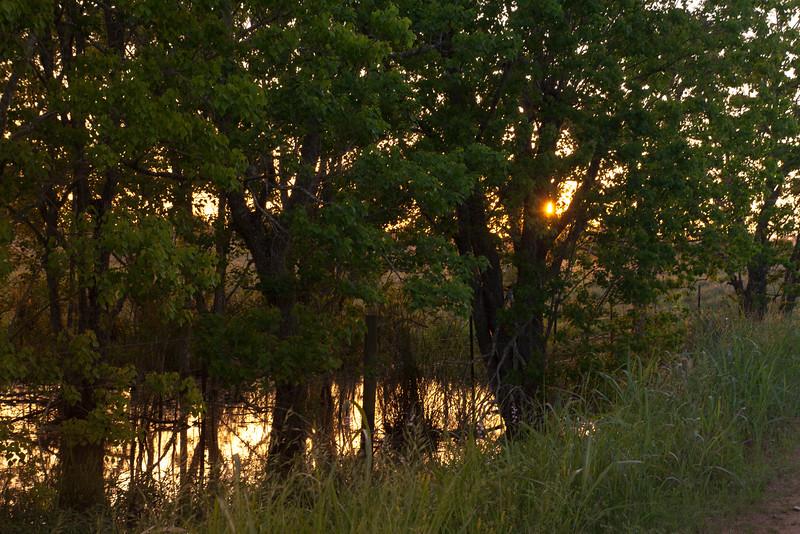 2016_4_9 Texas Wildflower Shoot-9008.jpg