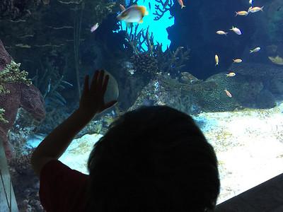 4-3 Georgia Aquarium