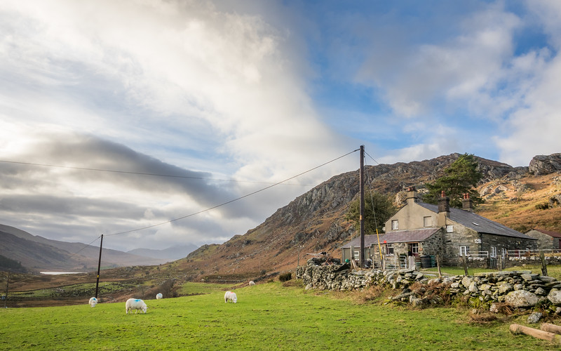 Sheep and Hill House, Capel Curig, Wales