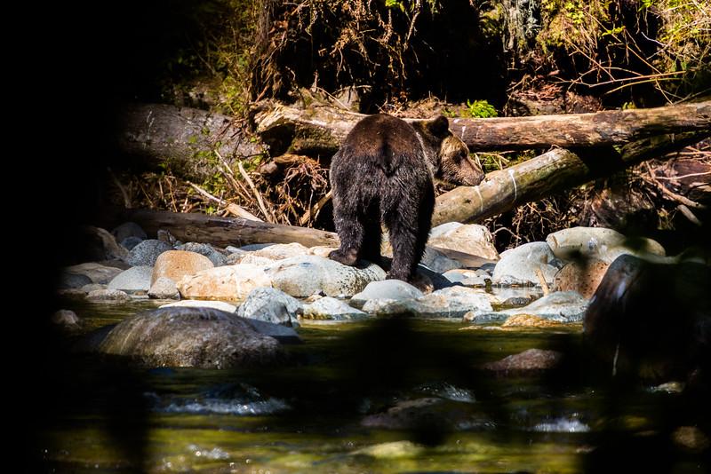150910_GrizzlyForest_4418.jpg