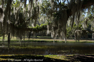 Avery Island Gardens, Louisiana