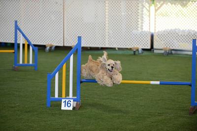 Sunday Performance II/Advanced Jumpers