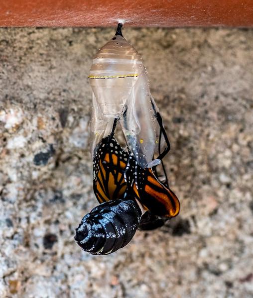 Monarch Birth-8.jpg