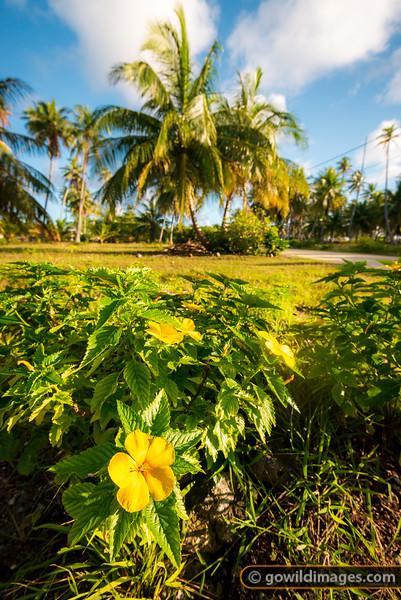 Tahiti Flowers