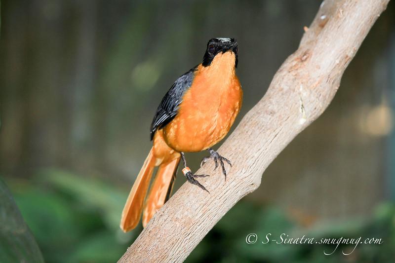 orange bird-3.jpg
