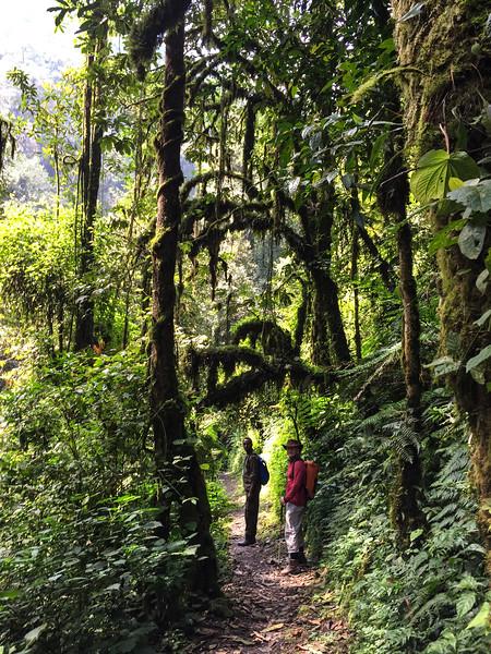 Waterfall trek, Nyungwe