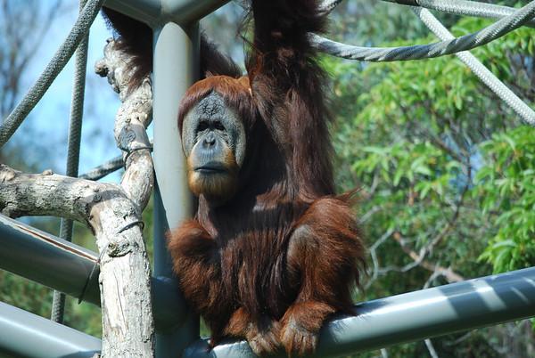 San Diego Zoo 10-3-2011