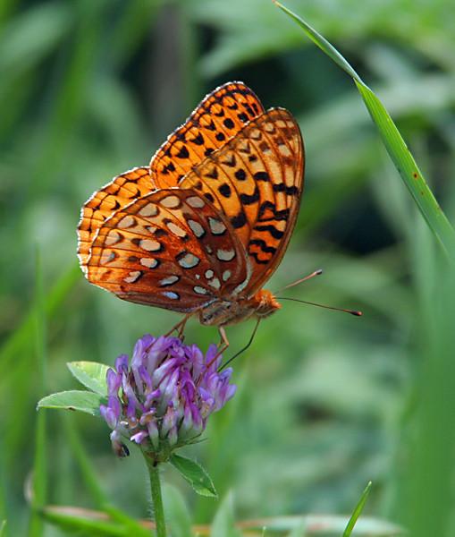 6745 Butterfly.jpg