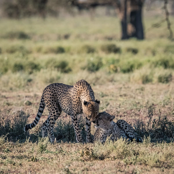 Tanzania_Feb_2018-257.jpg