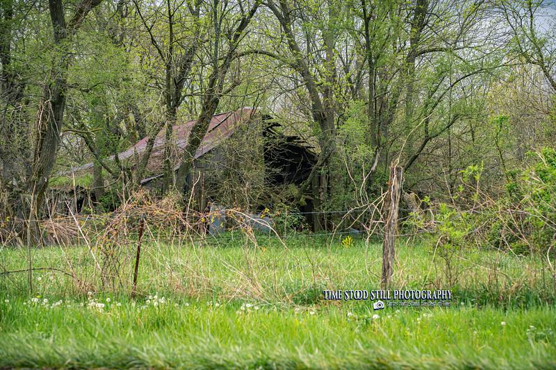 KC Landscape-36.jpg