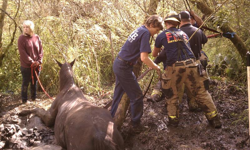 Horse Rescue 005.jpg