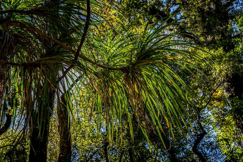 Wald der Schmarozerpflanzen