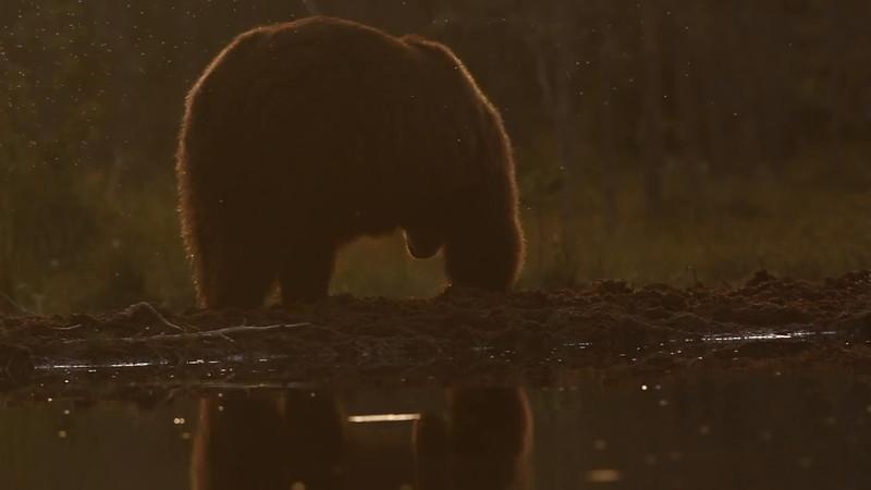 Bear by Piet van den Bemd