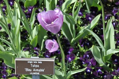 Botanical Garden May 4, 2008