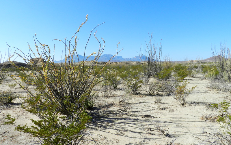 tornillo ocotillo view.jpg