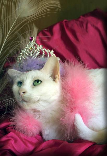 Glamour Nellie