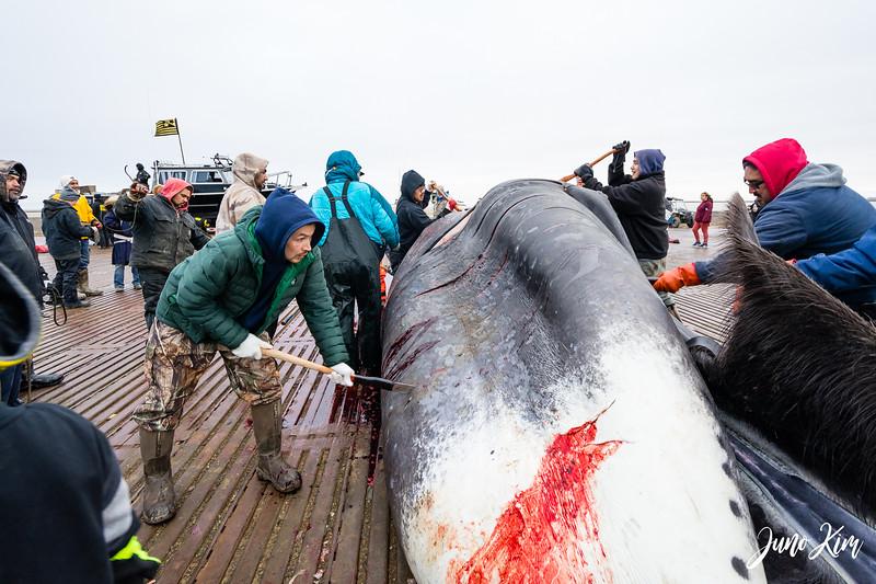 Utqiagvik Whaling-7167-Juno Kim.jpg