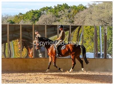 RANCH HORSES - 2016