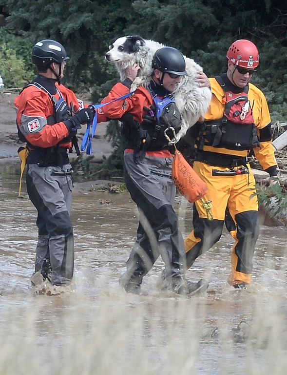 . Colin Dinsmore, of Summit County Rescue, center, carries a dog on his shoulder after rescuing 3 people, 5 dogs and 2 cats from a flooded home, Friday, Sept. 13, 2013 in Boulder, Colo. By truck and helicopter, thousands of people stranded by floodwaters came down from the Colorado Rockies on Friday, two days after seemingly endless rain turned normally scenic rivers and creeks into coffee-colored rapids that wrecked scores of roads and wiped out neighborhoods. (AP Photo/The Daily Camera, Jeremy Papasso) NO SALES