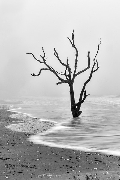 Edisto Tree Monochrome 1.jpg