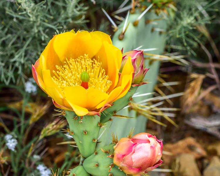 Ronald W Caspers Wilderness Park, Capistrano, CA USA