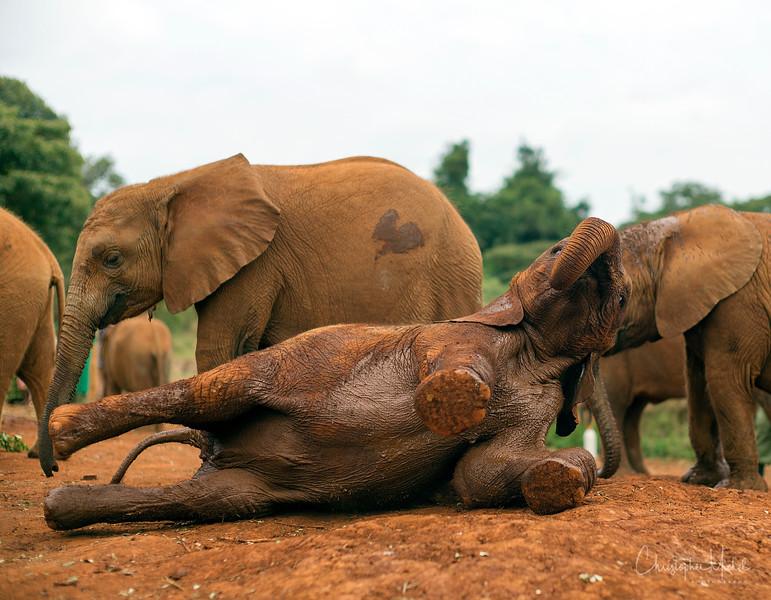 Aug312013_nairobi_blixen_elephant_m9_2859.jpg