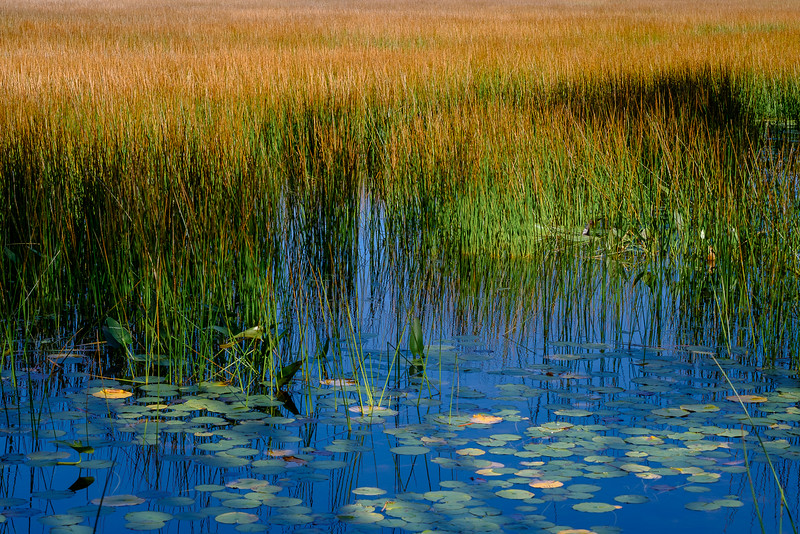 Grass, Reeds and Still Blue Water