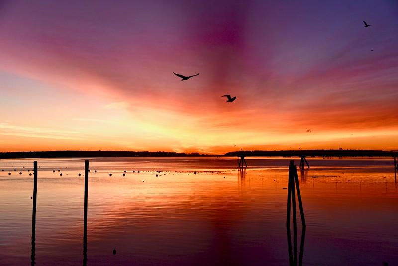 Soaring Sunrise.jpg