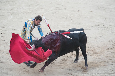 Madrid Bull fight 12 May 2012