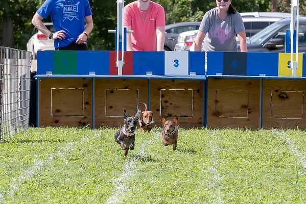 Weiner Dog Race 2018