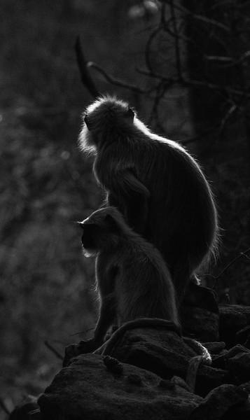 India_April_2019-2833.jpg