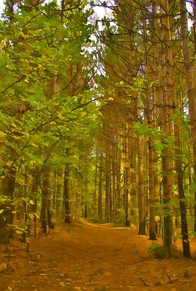 Spruce Woods.jpg