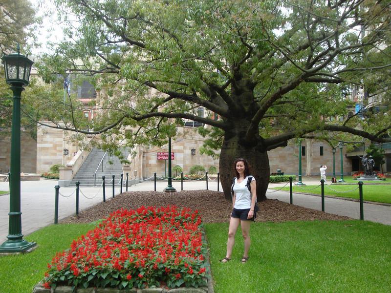 Boab tree.JPG