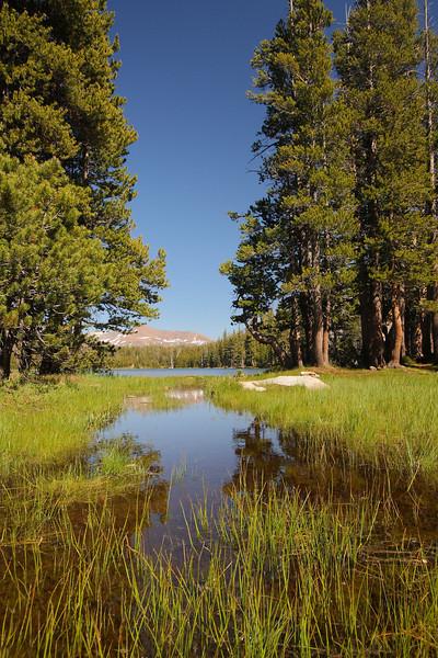 Yosemite 63.JPG