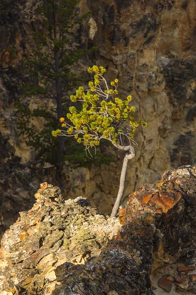 Yellowstone Day 3-5848.jpg