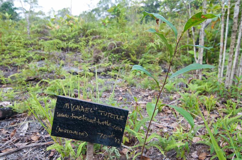 Borneo-Jungle-6770.jpg