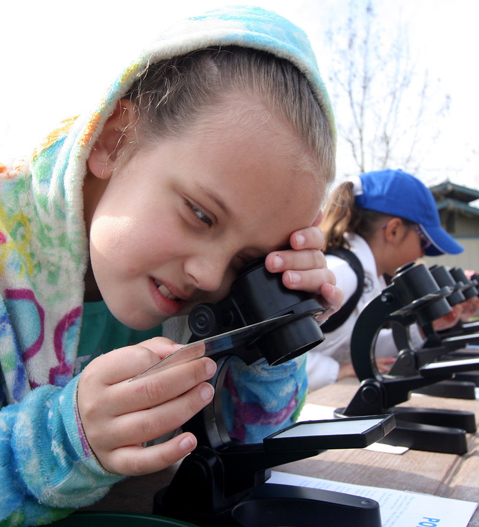 . Savannah Roberson, 8, from Jefferson School District in Tracy, Calif., looks at phytoplankton slides in a microscope setup as part of the Trout in the Classroom program at Shadow Cliffs Regional Recreation Area in Pleasanton, Calif., on Thursday, March 14, 2013. Classes are given 35 trout eggs and tanks as part of the program sponsored by the State Department of Fish and Wildlife. Hatchlings that have grown large enough are released into local lakes. (Jim Stevens/Staff)