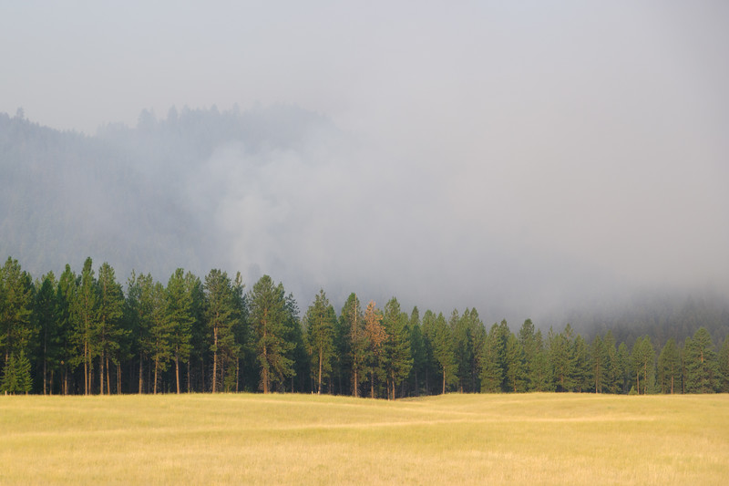 Montana Forest Fire