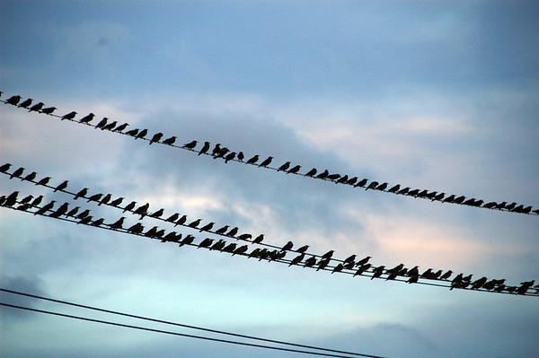 BIRDS & RAINBOWS - 27 JULY, 2009