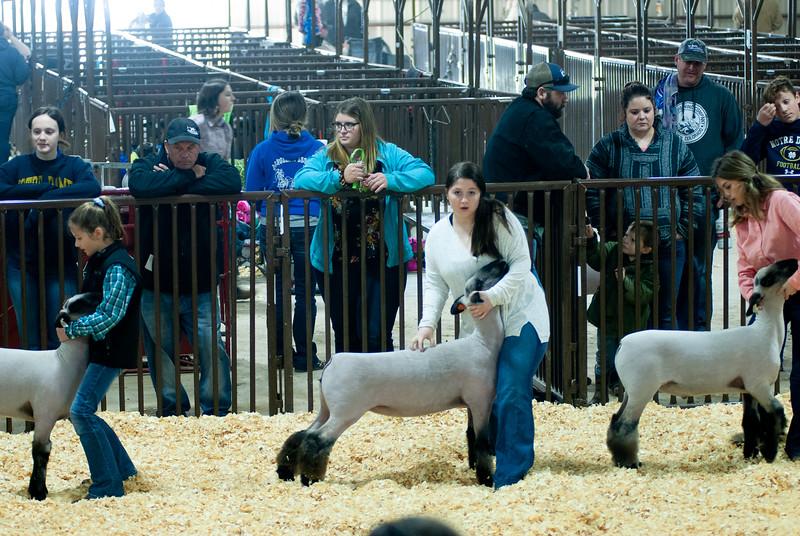 kay_county_showdown_sheep_20191207-72.jpg