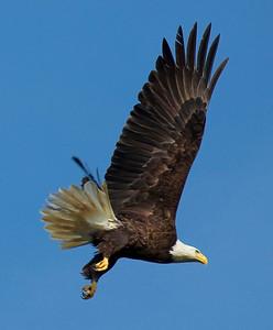 Baytown Eagles 2-13-2010