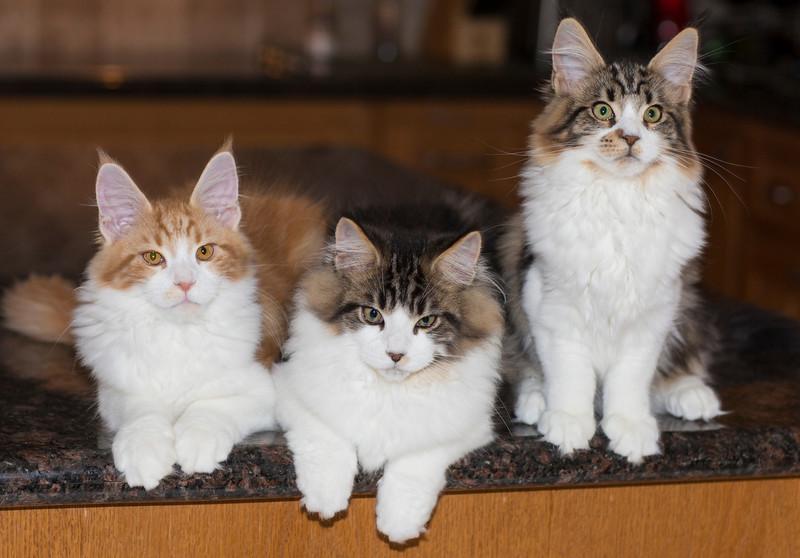Kittens276.jpg