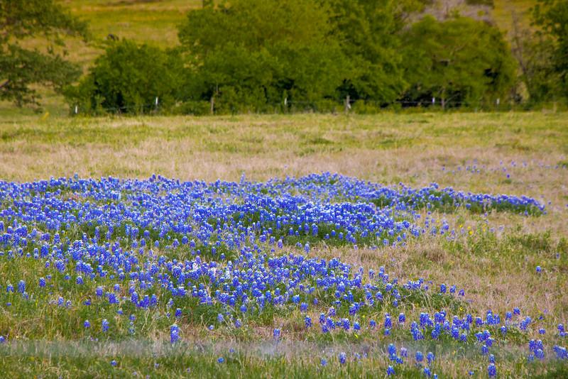 2016_4_9 Texas Wildflower Shoot-8755.jpg