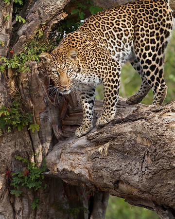 Kenya, Africa (3/11)