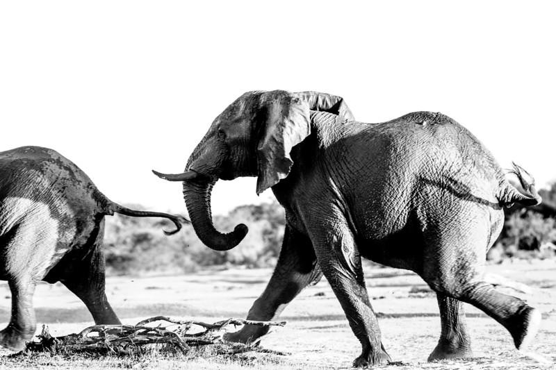 NGSE_BotswanaB2018_kailadrayton-9572.jpg