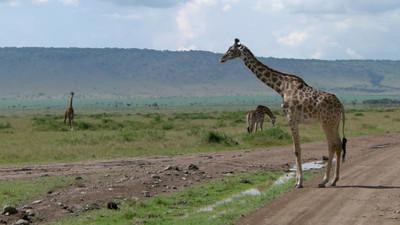 Masai Mara Safari - #2